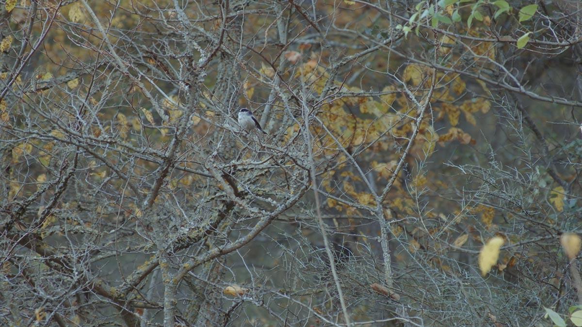 aves valle rio ungria